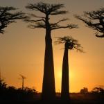 Malagasy-Tours-Le-grand-tour-a-l'aventure-11