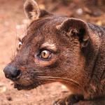 faune malgache (1)