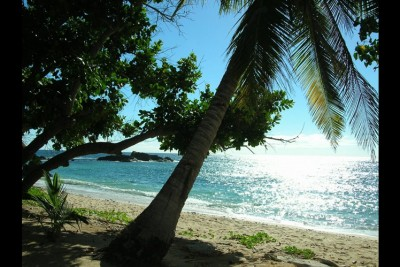 Coconut Ankazoberavina