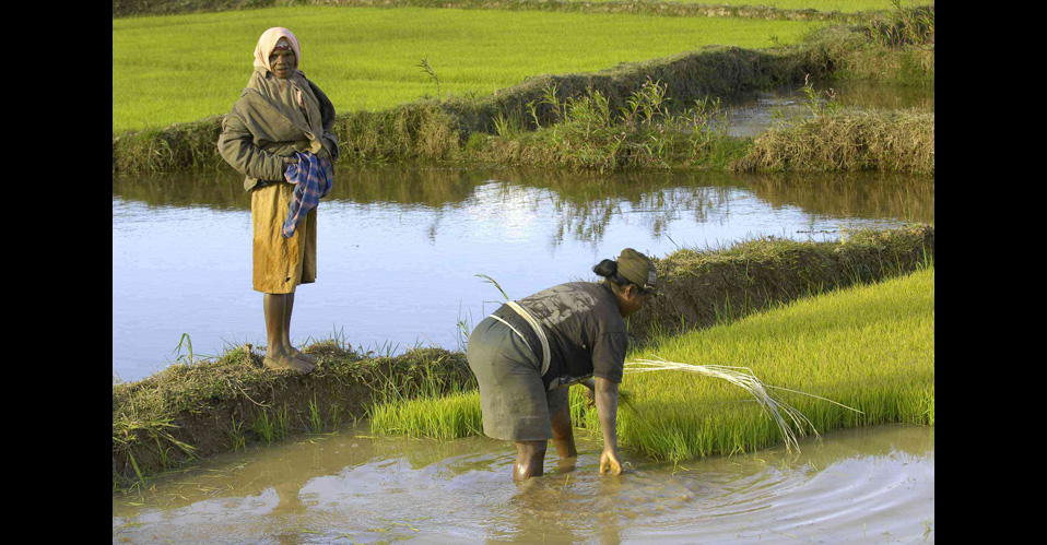 Agriculture in Madagascar – 13 days