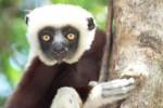 02-lemuriens