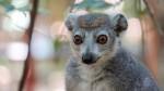 06-lemuriens