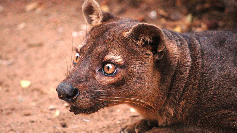 The malagasy wildlife