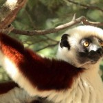 Pictures : lemurs of Madagascar